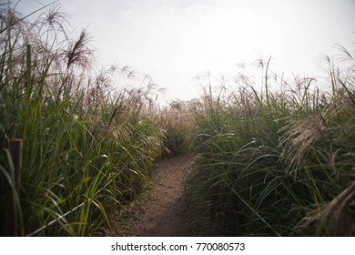 Grass flower and walk way in the garden