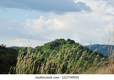 grass flowering blowing from wind on Khao Lon mountain in Thailand