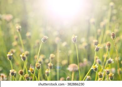 Grass flowers against sunlight in field