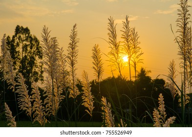 Grass flowers to the evening sun.