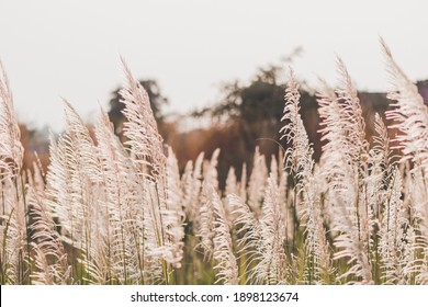 Grass flowers in the nature background with sun set, Soft focus the beautiful a flower in the garden.