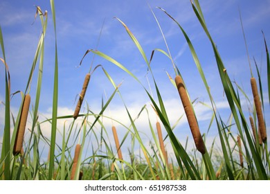 Grass flowers on the day of clear blue sky.
