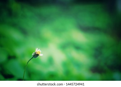 Grass flowers on a green nature background and leave space blank.