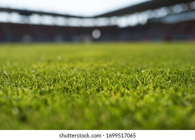 Grass at football stadium during sunny day