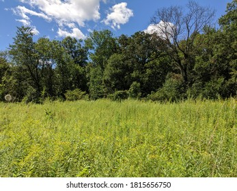 Grass Forrest and Blue Sky with White clouds