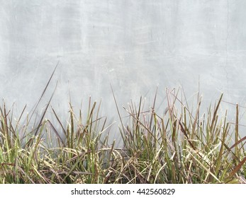 Grass at front of concrete wall texture background