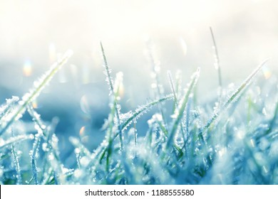 Grass in the frost. Frost on the grass in the morning sun.Winter natural plant background in cold blue tones.  Grass background in gentle pastel colors.November and December. Late Autumn. Winter time