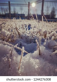 Grass in the frost under the snow