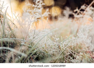 grass is frozen in ice crystals on the backdrop of the setting sun. Vignette is made for artistic effect