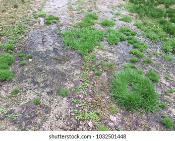 Grass in the gravel