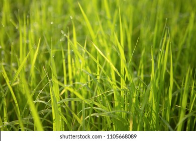 grass green blackground