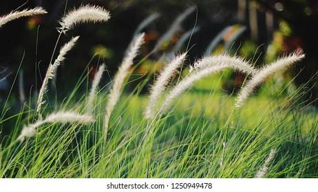 Grass green coler