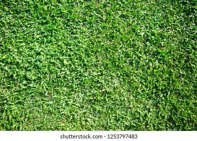 grass green field