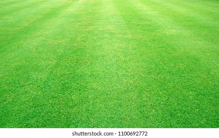 Grass green field football Beautiful natural background pattern.