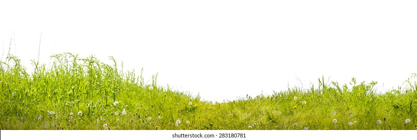 grass a green lawn on a white background