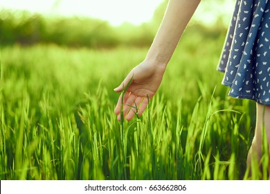 Grass, grass green, a woman dabbling to the grass by hand.