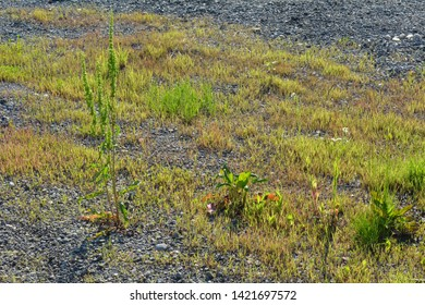 Grass growing in the asphalt