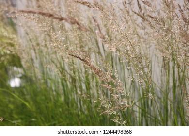 Grass growing bolt