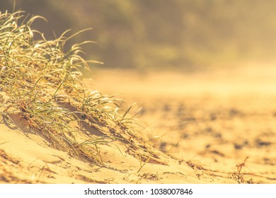 Grass growing on a sand dune
