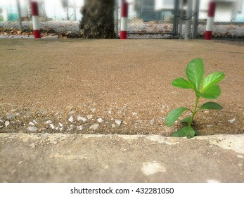 Grass are growing on side-way, Life is a struggle concept.