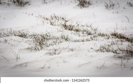 GRass growing on snowy ground during winter