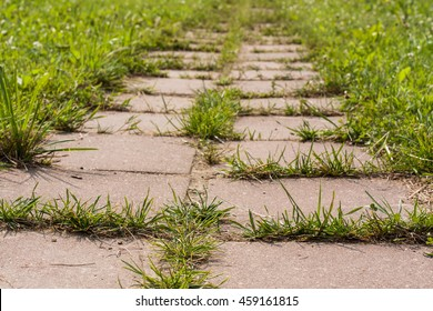 Grass Growing In Road Of Cement Tiles In Garden Close Up. Struggle Weeds.