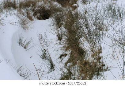 Grass growing through the snow