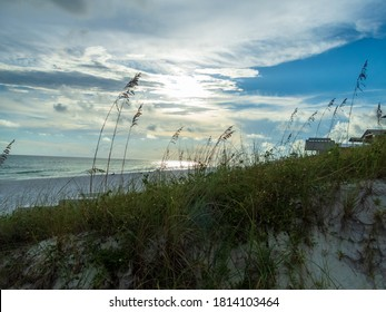 Grass grows along the beach in Florida's Henderson Beach State Park