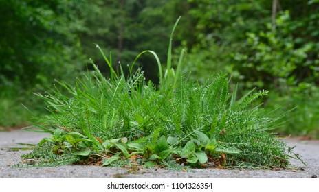 grass grows in asphalt road, southern Bohemia, Czech Republic