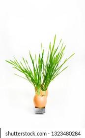Grass grows in chicken eggshell - Shutterstock ID 1323480284