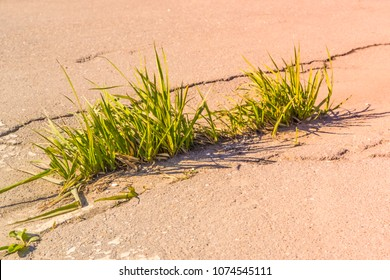 The grass grows through the asphalt