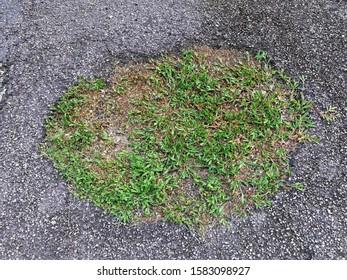 The grass grows through concrete background - life power concept