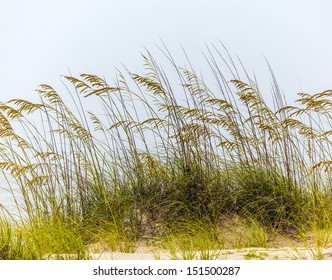 grass in harmonic structure grows at the sand dune