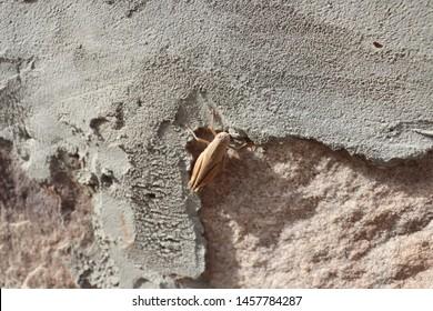 A Grass Hopper Sitting On Wall