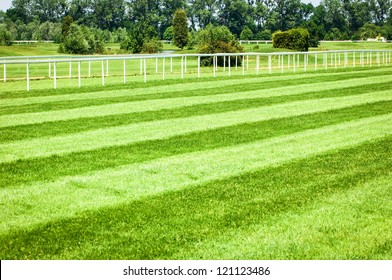 grass at a horseracing track - nice background with space for text