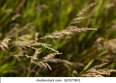 grass illuminated by sunset