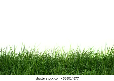 grass isolate on white background