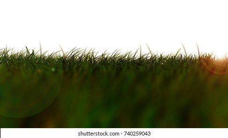 Grass Isolated, dark green low Angle