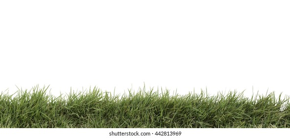 grass isolated on white. Add Clipping path