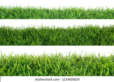 Grass isolated on white background.