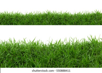 Grass isolated on white background. - Shutterstock ID 550888411