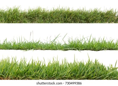 Grass isolated on white background,Objects with Clipping Paths
