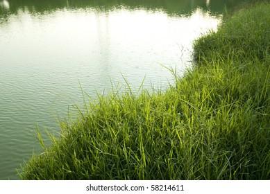 grass Lakeside