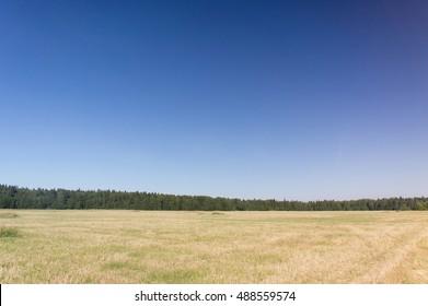 Grass Lawn Growth Season
