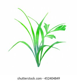 grass and leaves watercolor green. floral design element isolated on white background