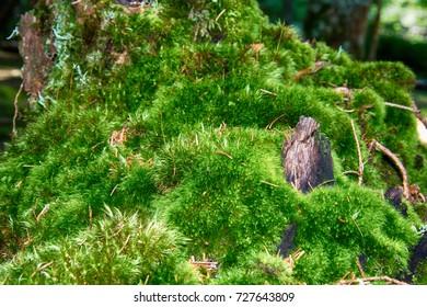 grass like a carpet