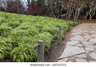Grass like plants patch surrounded by a bamboo fence and a stone pathway