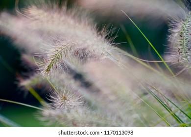 Grass lit by the autumn sun