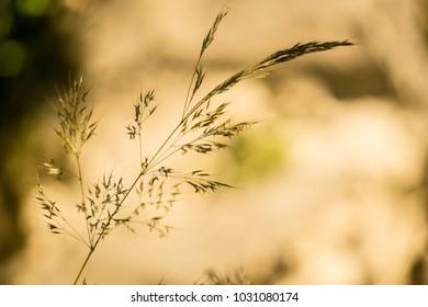 grass macro bokeh