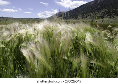 Grass meadow in California